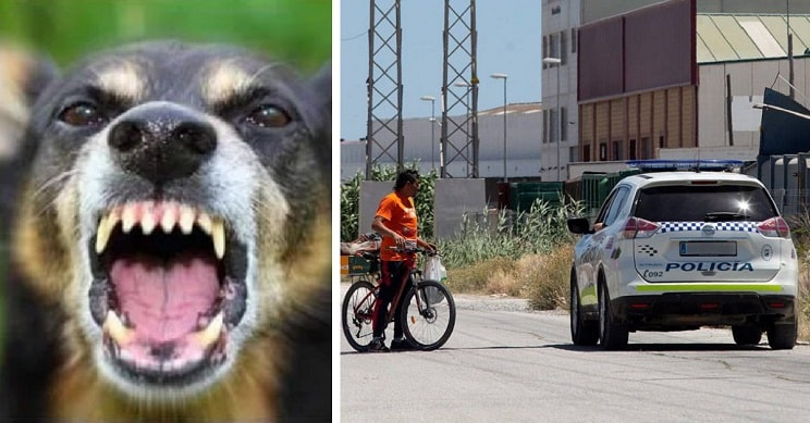 perros atacan joven Malaga 2