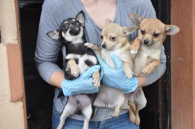animalistas perros