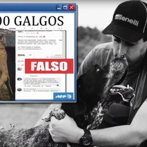 Indignación en el sector cinegético por la censura de Facebook a un documental sobre el abandono de perros de caza
