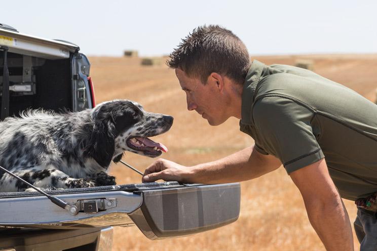 Los perros de caza volvieron a ser los menos abandonados en 2017, según Affinity
