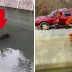 Un cazador se la juega para rescatar a sus perros de caza tras caer a un canal persiguiendo a un jabalí