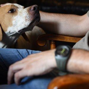 Los perros de caza volvieron a ser los menos abandonados también en 2018