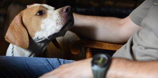 perros de caza menos abandonados