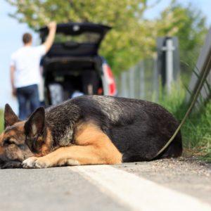 El estudio de Affinity de 2020 también desmonta la mentira sobre el abandono de perros de caza