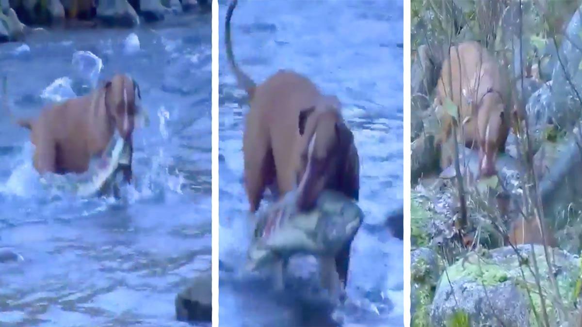Graban a dos perros de caza con una increíble habilidad para pescar