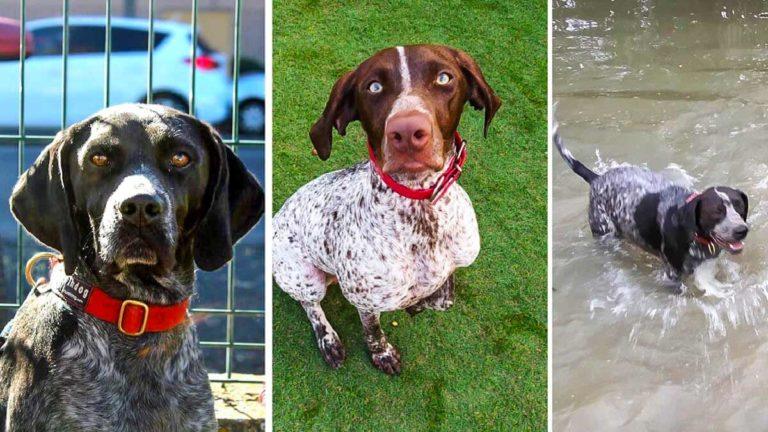 Los tres perros robados. / J.M,