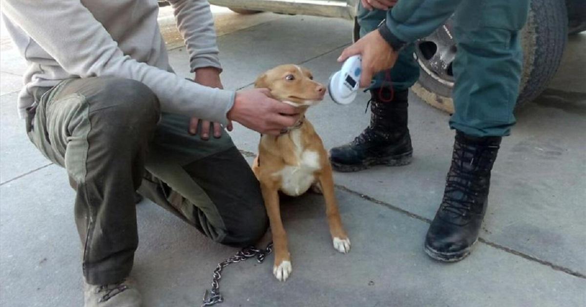 El Seprona recupera en Córdoba 29 perros de caza robados