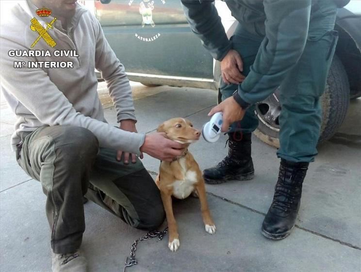 En la foto, uno de los perros incautados por el Seprona. / Guardia Civil