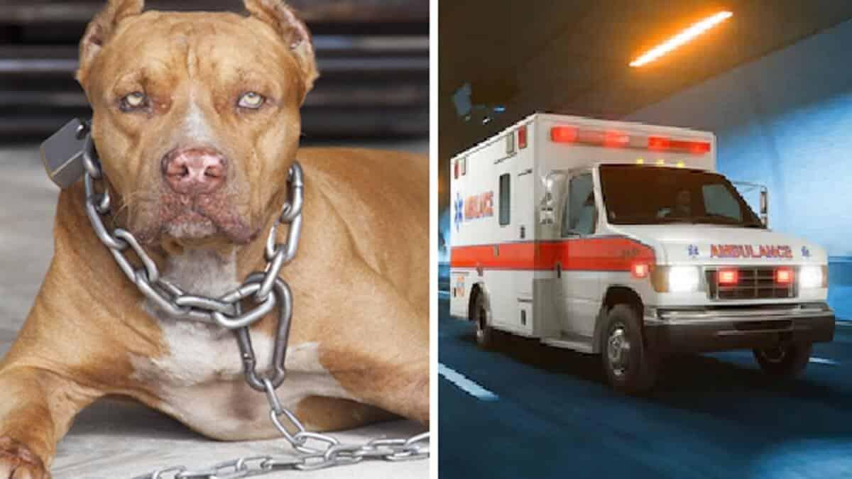 Dos pitbull matan a un ladrón cuando intentaba robar en una casa