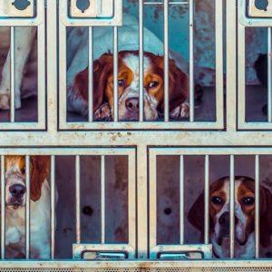 Acusan a una protectora de Madrid de robar perros y gatos en un pueblo asturiano