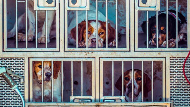 Perros encerrados.