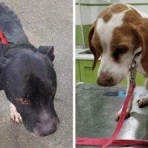 Pillan a una animalista con sus perros encerrados y sin comer durante dos meses