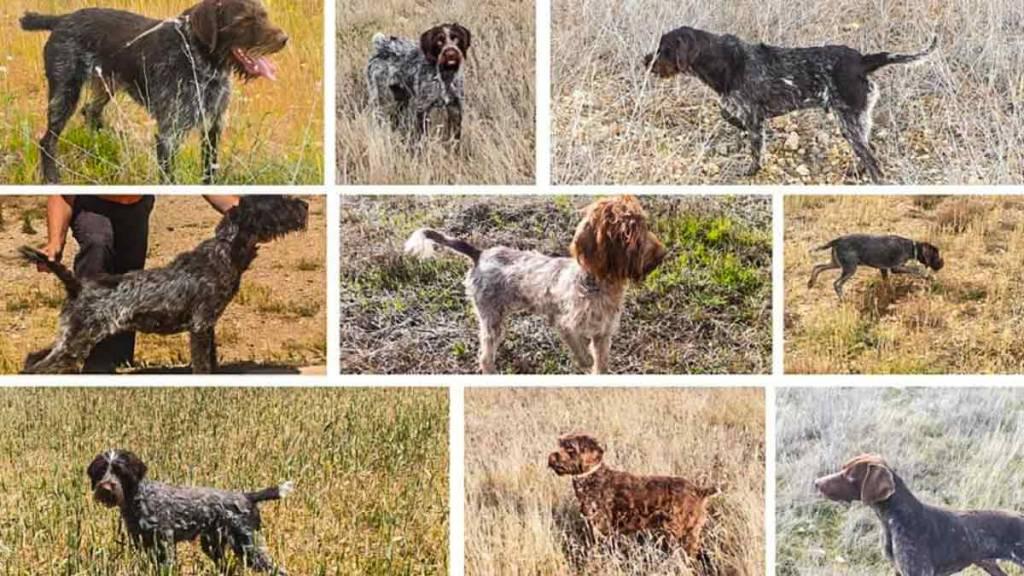 Algunos de los perros robados. / O.V.