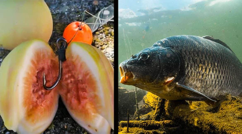 Carpfishing: Cómo pescar carpas… ¡usando higos!