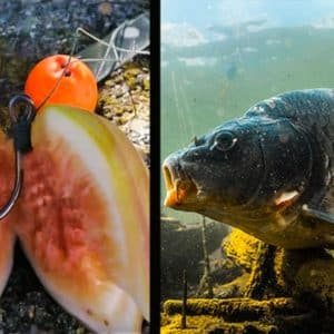 Carpfishing: Cómo pescar carpas... ¡usando higos!