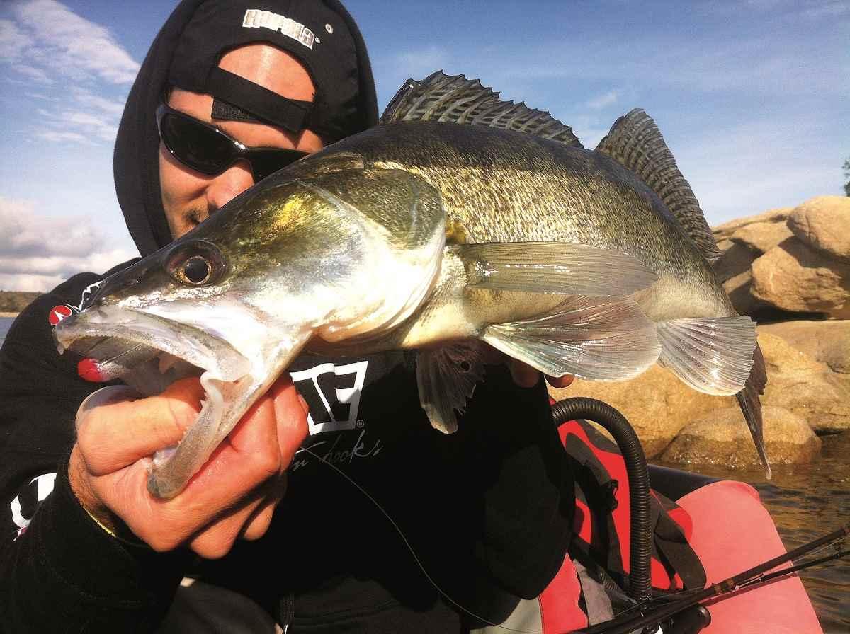Todo sobre la pesca de depredadores en Cinegética 2016