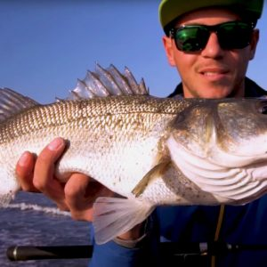 Trucos para pescar lubinas a spinning