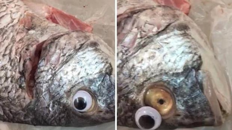 Ojo de plástico pegado en el pescado / Fotografía: www.abc.es