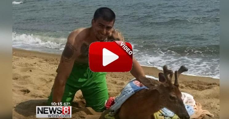 Un pescador de tiburones encuentra y rescata un ciervo ¡en medio del mar!