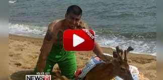 pescador de tiburones rescata un ciervo en el mar.