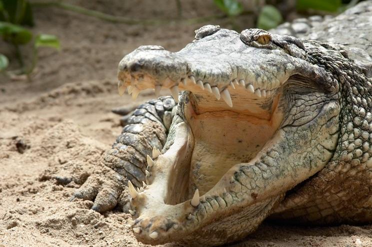Encuentran el cuerpo de un pescador devorado por un cocodrilo