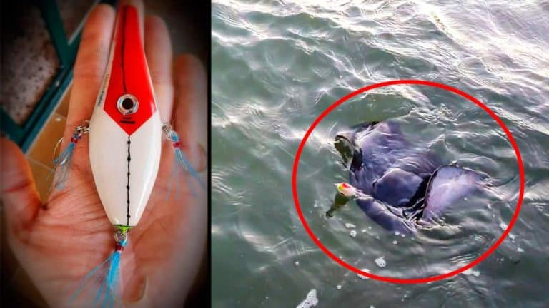 El señuelo casero y una imagen de la picada de la raya torpedo.