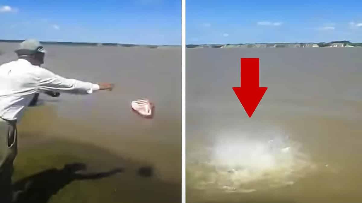 Un pescador lanza un pedazo de carne a un río y lo que pasa lo hace viral