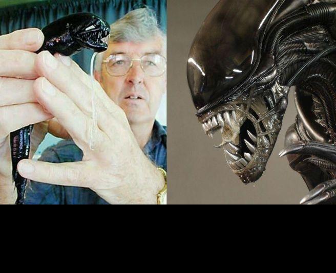 ¡Alien existe! Y tiene forma de pez