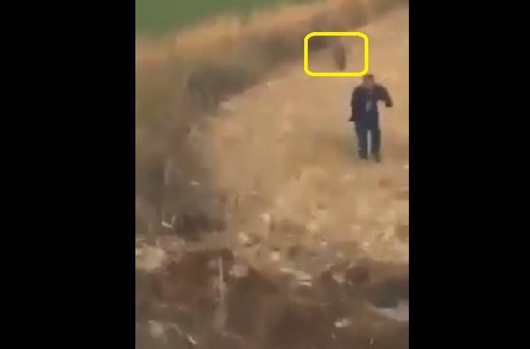Localiza un grupo de jabalíes y corre tras ellos para lanzarles una piedra