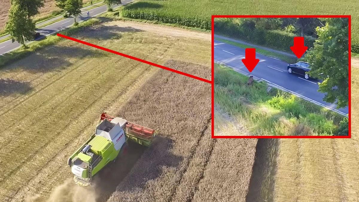 Varios jabalíes escapan de una cosechadora y a punto están de provocar un accidente