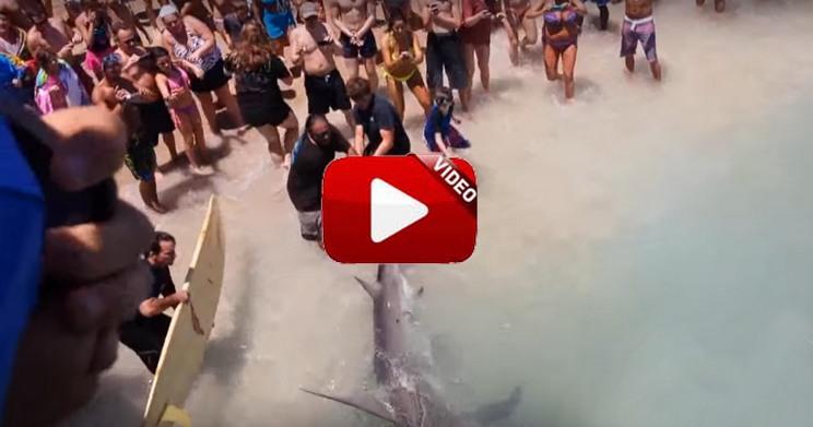 Pescan un tiburón martillo de cuatro metros en una playa de Florida