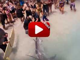picada tiburon playa.