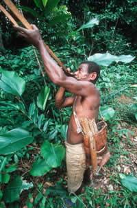 pigmeo baka cazando
