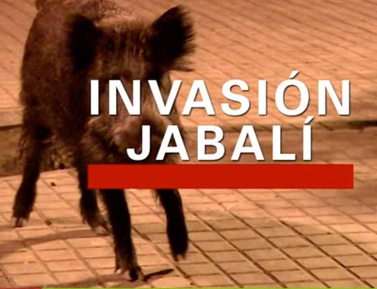 'Invasión Jabalí' el documental de TVE que saca a la luz el problema de la plaga de jabalíes