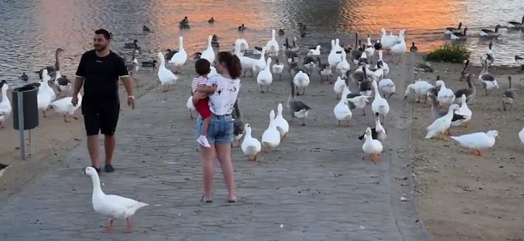 plaga de patos
