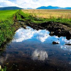 La Federación exige al MITECO que el nuevo reglamento sobre el plomo no afecte a la caza