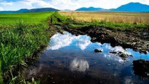 Europa paraliza la reforma sobre los humedales que amenazaba la caza en España