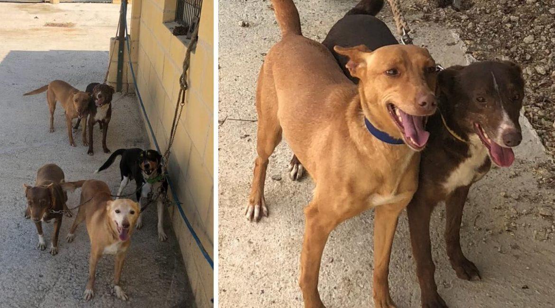 Un cazador destrozado tras el robo de sus cuatro perros pide ayuda para localizarlos