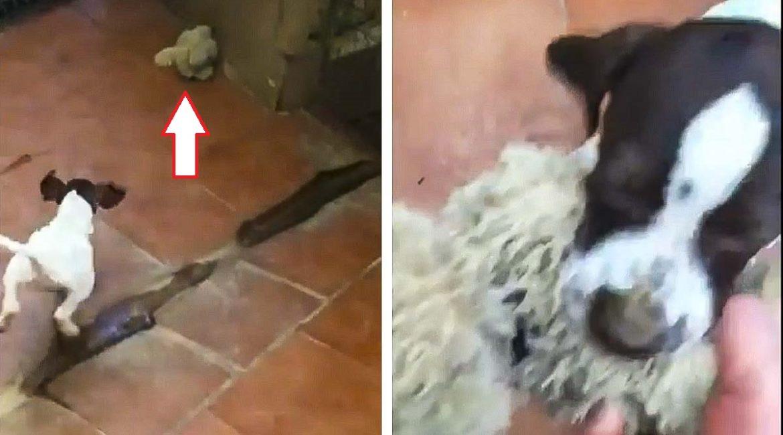 Este cachorro de pointer te va a enamorar: ¡así cobra con solo 50 días!