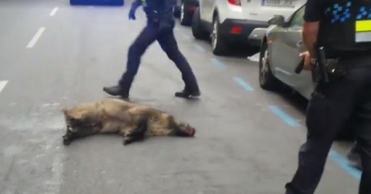policia dispara a jabali
