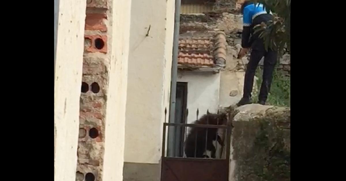 Un jabalí siembra el caos en un pueblo y la Policía Local se lía a tiros