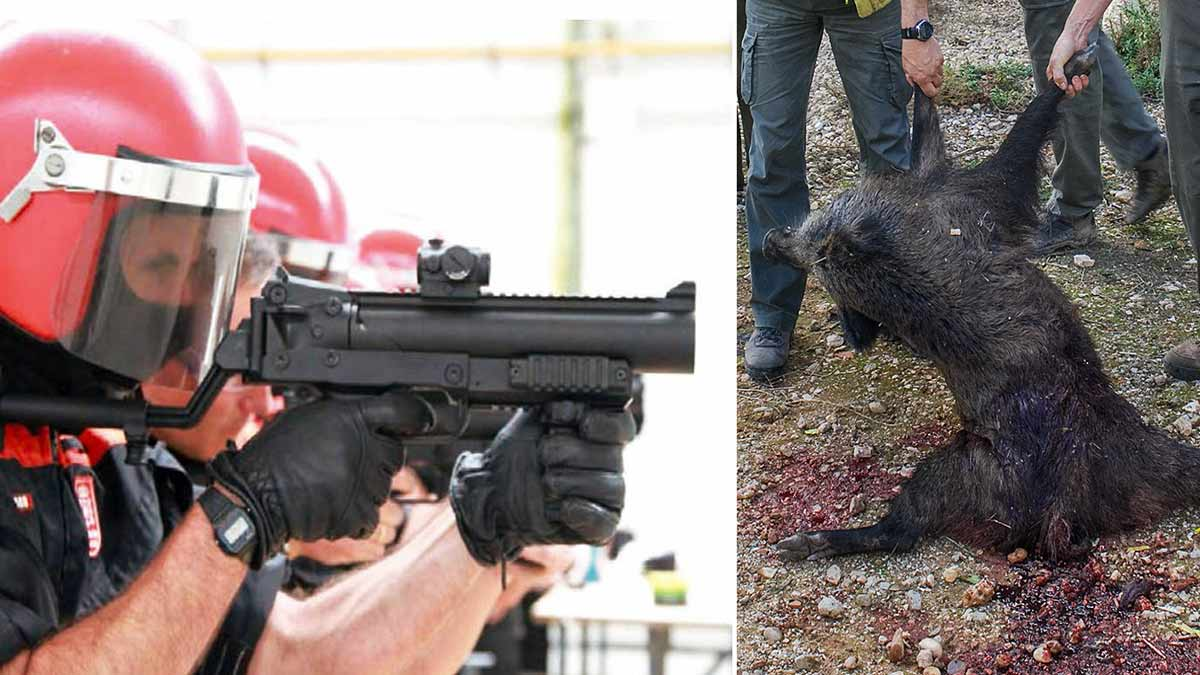 La Policía hará esperas de jabalí y matará conejos con foco y desde el coche durante el estado de alarma en Navarra