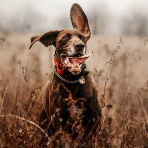 Perros envenenados: ¿Cómo saber qué ha tomado y cómo actuar?