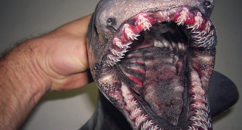 Las extrañas capturas de un pescador inquietan las redes sociales
