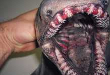portada asombrosas capturas de un pescador ruso
