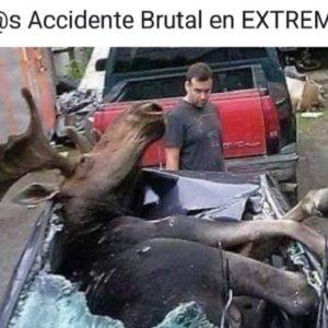 Los mejores memes sobre el «reno decapitado en el Guadiana»