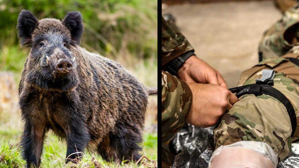 Las heridas de jabalí pueden provocar la muerte de un cazador. Reaccionar correctamente es fundamental. ©Shutterstock