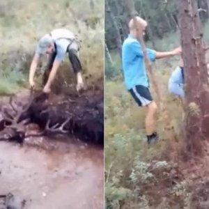 Varios cazadores rescatan a un ciervo atrapado en un pantano