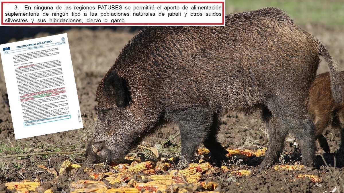 El Gobierno prohíbe cebar a jabalíes, ciervos y gamos en toda España (aunque admitirá excepciones)