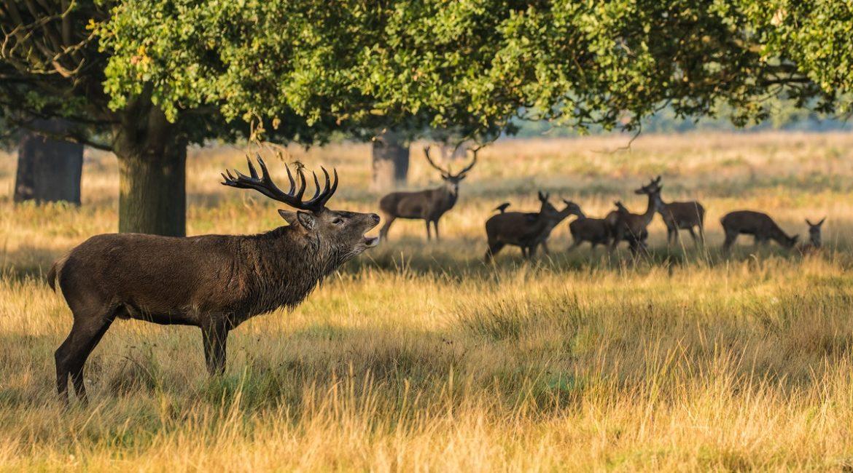 La prohibición de la caza en Cabañeros ya cuesta dos millones de euros a los españoles